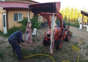 Butchered Lamb